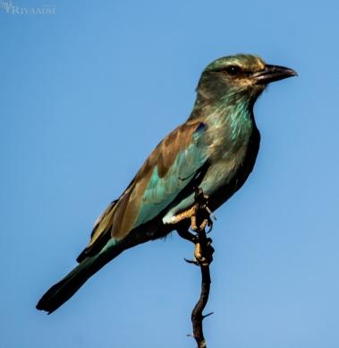 kruger bird type unknown