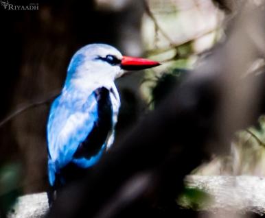 kruger bird unknown
